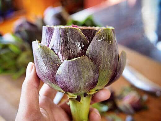 Artichoke with sharp tips snipped off