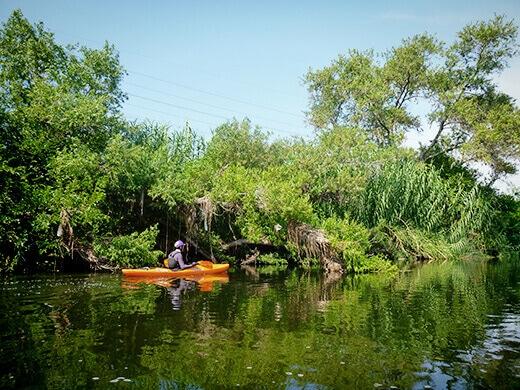 Lush vegetation on the Los Angeles River