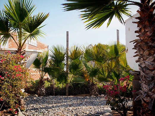 Fence decorated with palm fronds