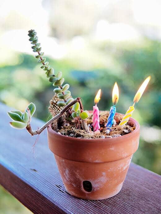 Garden Betty's third anniversary