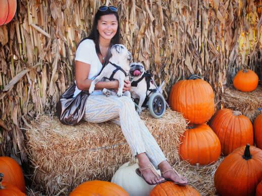 The pugs' first pumpkin patch