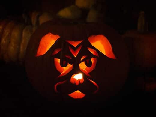 Pug-o-lantern