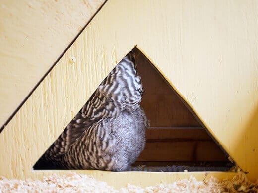 Kimora in her nest