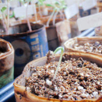 Seed Starting Containers You Already Have Around the House