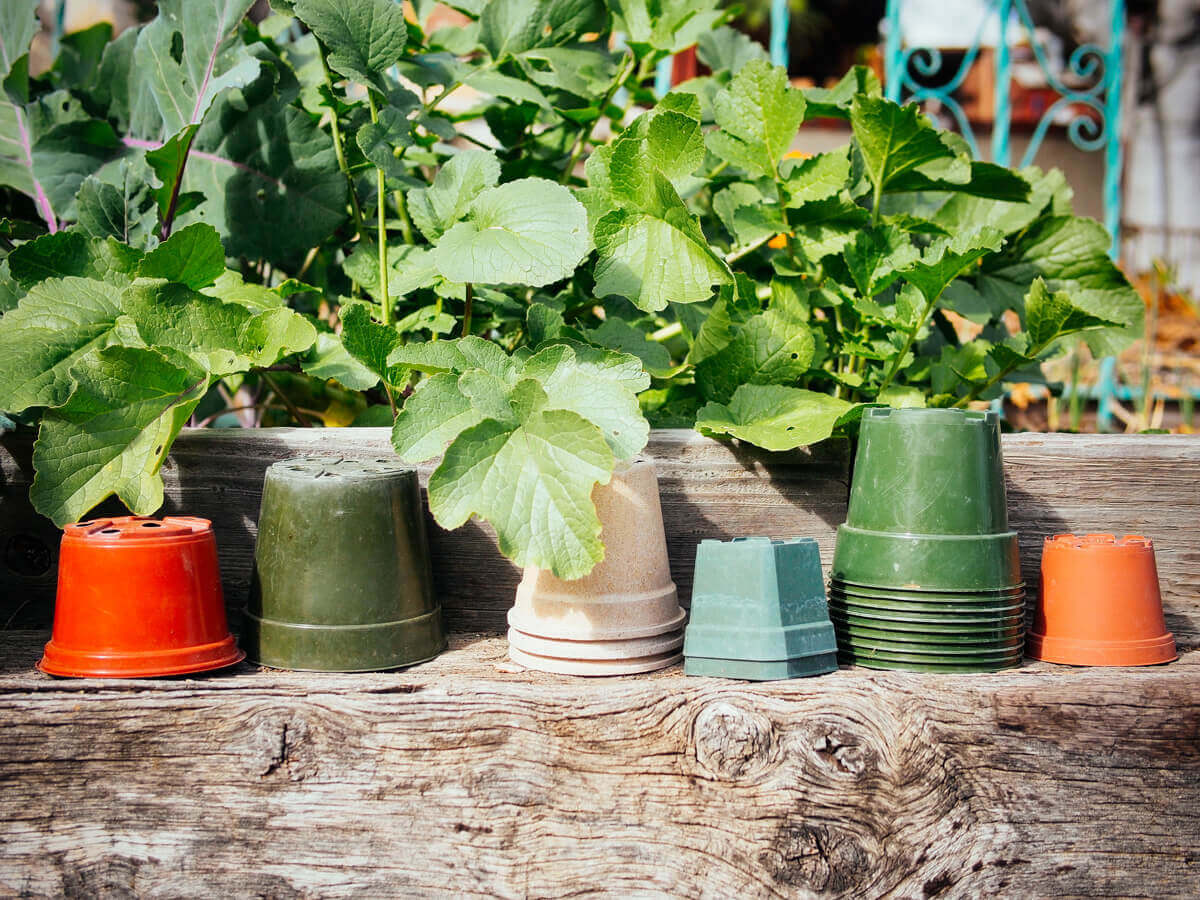 Reuse pots year after year