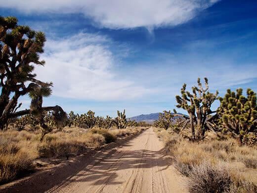 Joshua trees in the California desert