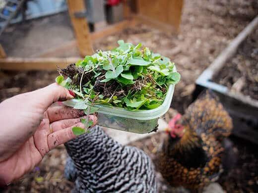 Salad treat