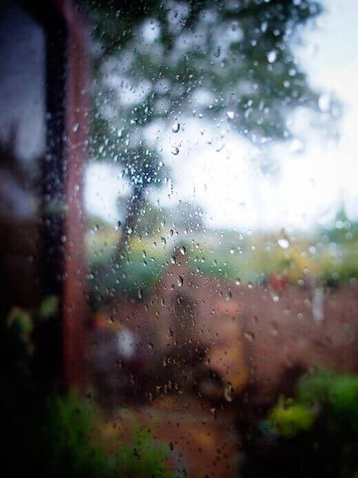 Rare rainy day