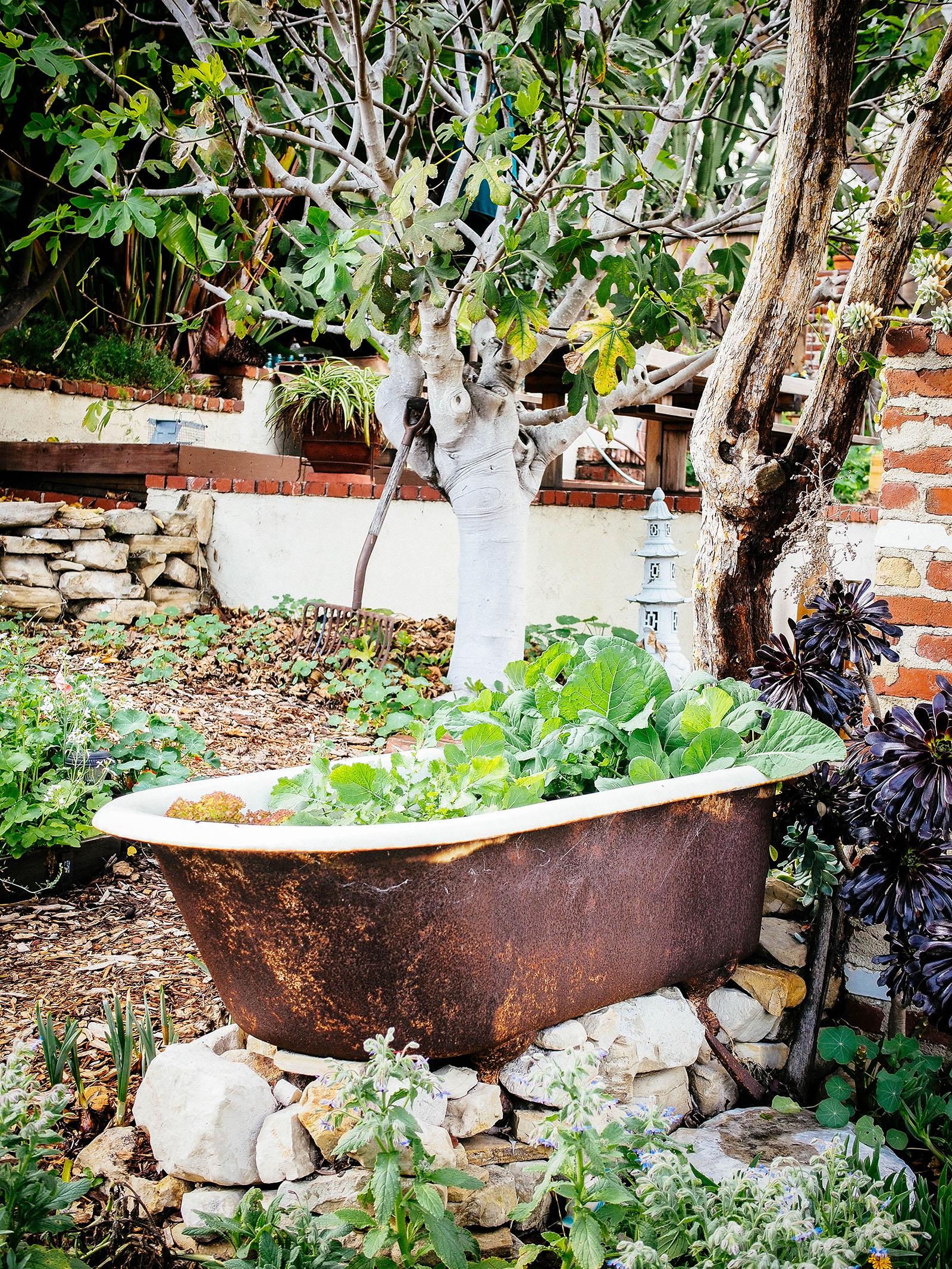 The no-dig vegetable garden