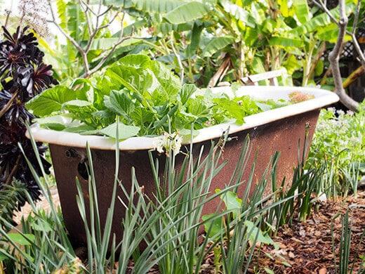 Vintage clawfoot tub turned bathtub planter