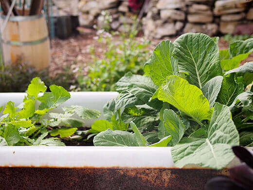 Growing vegetables in an upcycled bathtub planter