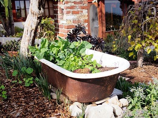 Bathtub planter