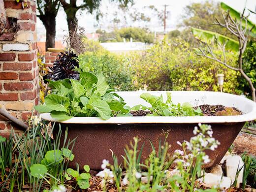 Repurposed bathtub planter