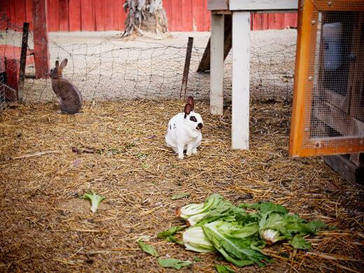 Bunnies in waiting