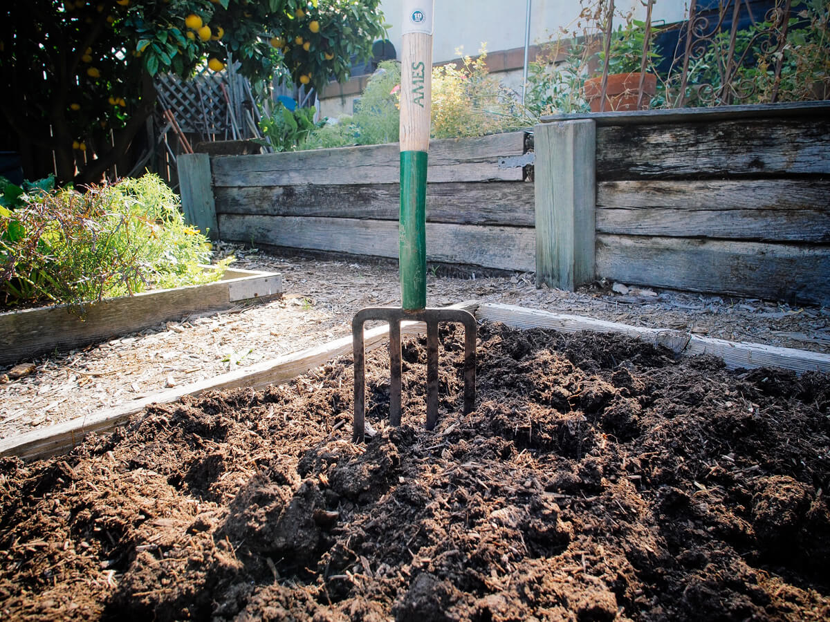 Dig in the compost and fertilizer with a spading fork