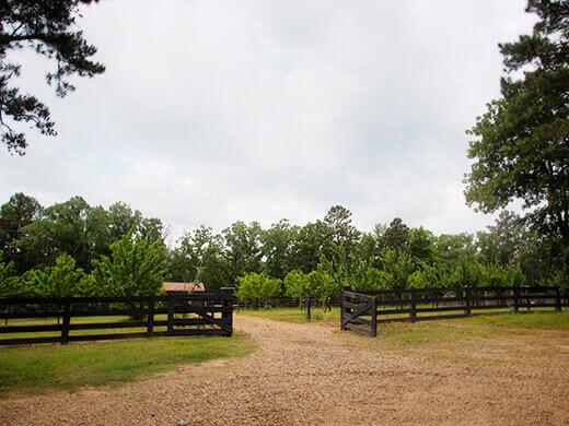 Stone fruit orchard