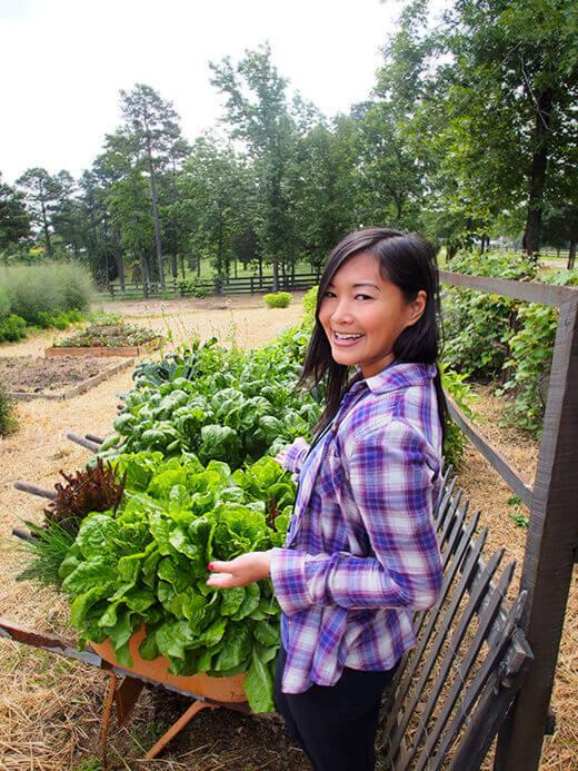 Wheelbarrow planters