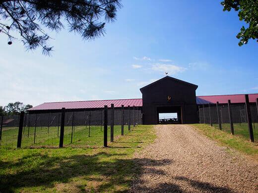 P. Allen Smith's chicken coop