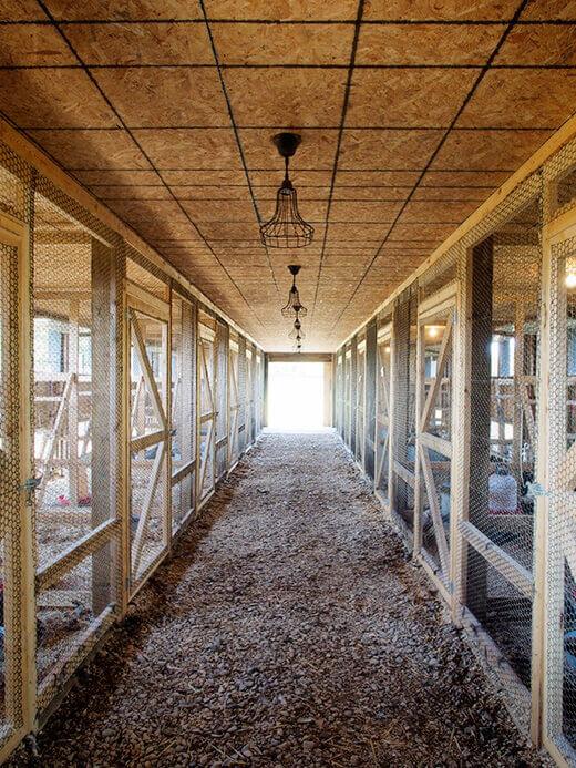 Inside the Poultry Palace
