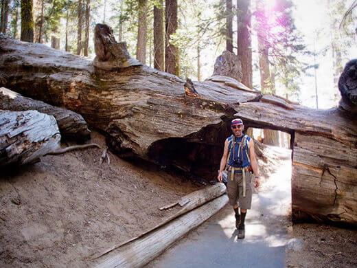 Walking through a fallen sequoia