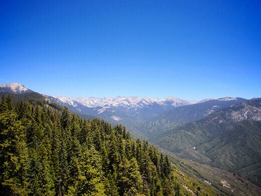 View of the Giant Forest and Great Western Divide