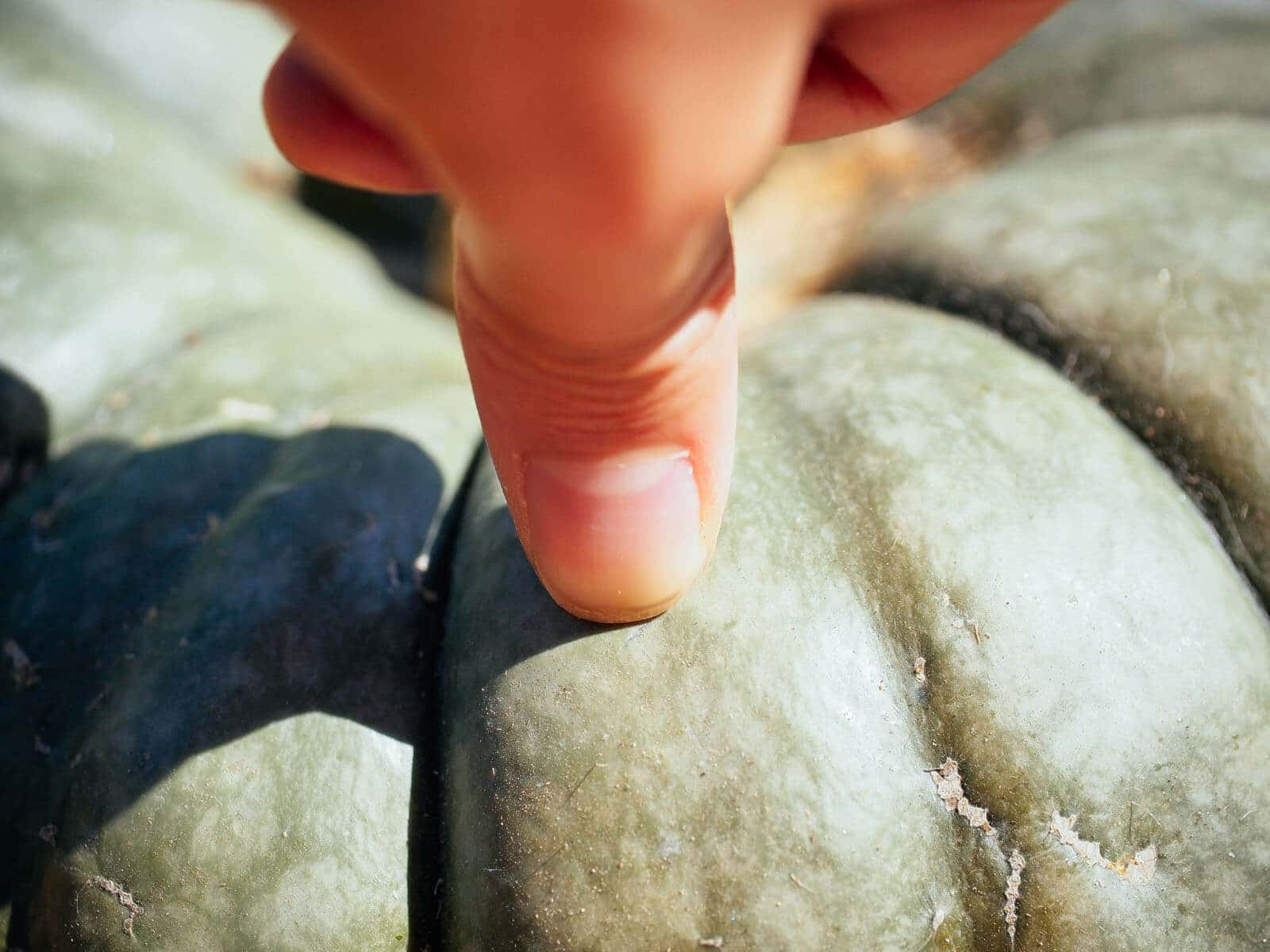 Test the rind's toughness with your fingernail
