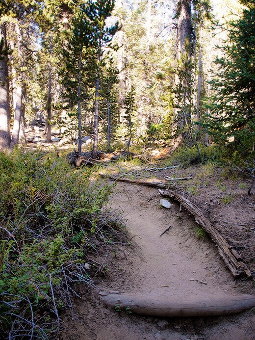 The first mile of the San Jacinto Peak trail