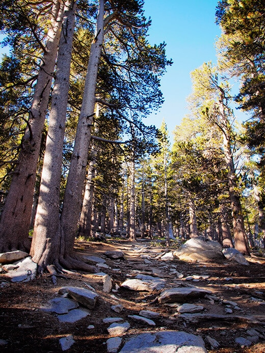 The trail to Mount San Jacinto