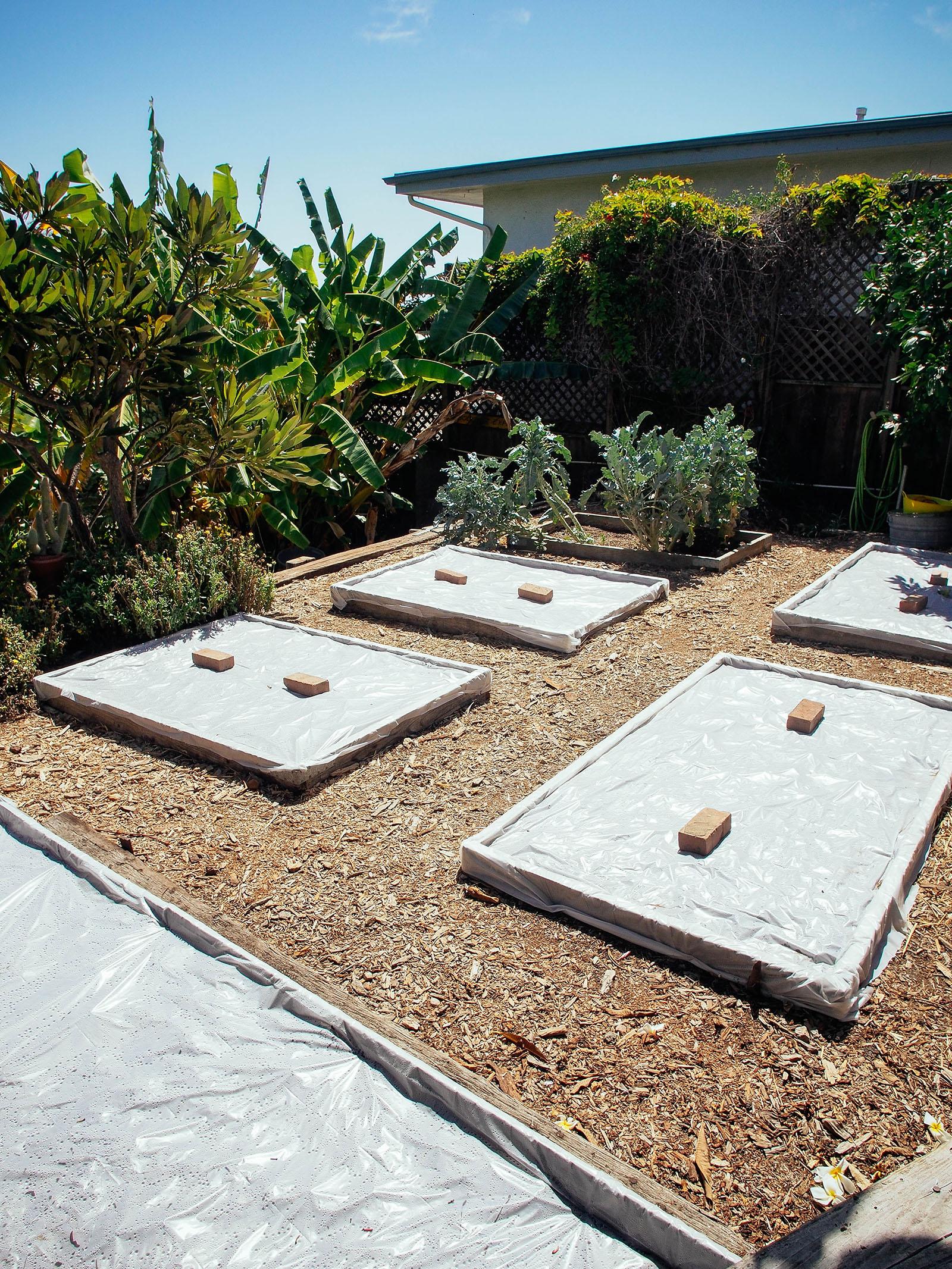Soil Solarization In Raised Beds Garden Betty
