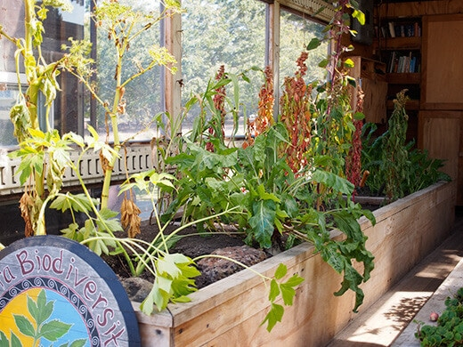 Raised beds inside a truck