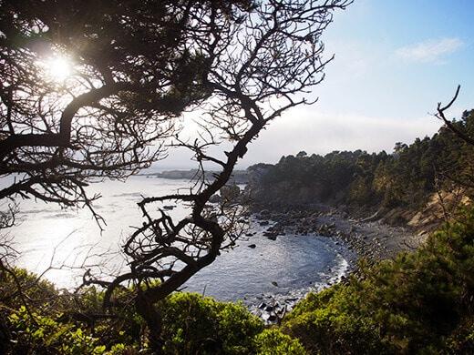 Salt Point on the Sonoma Coast