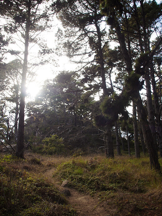 One of the many trails winding around Salt Point