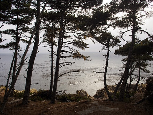 Salt Point beach