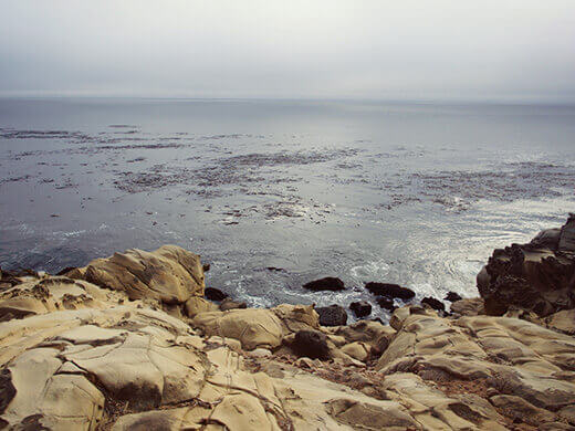 Salt-sculpted sandstone beach