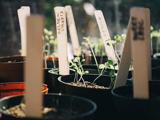 Fall seedlings