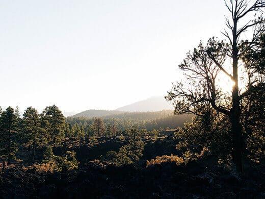 Revegetated volcanic landscape