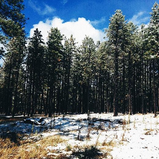 First snowfall in Arizona