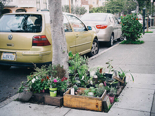 Parkway garden in San Francisco