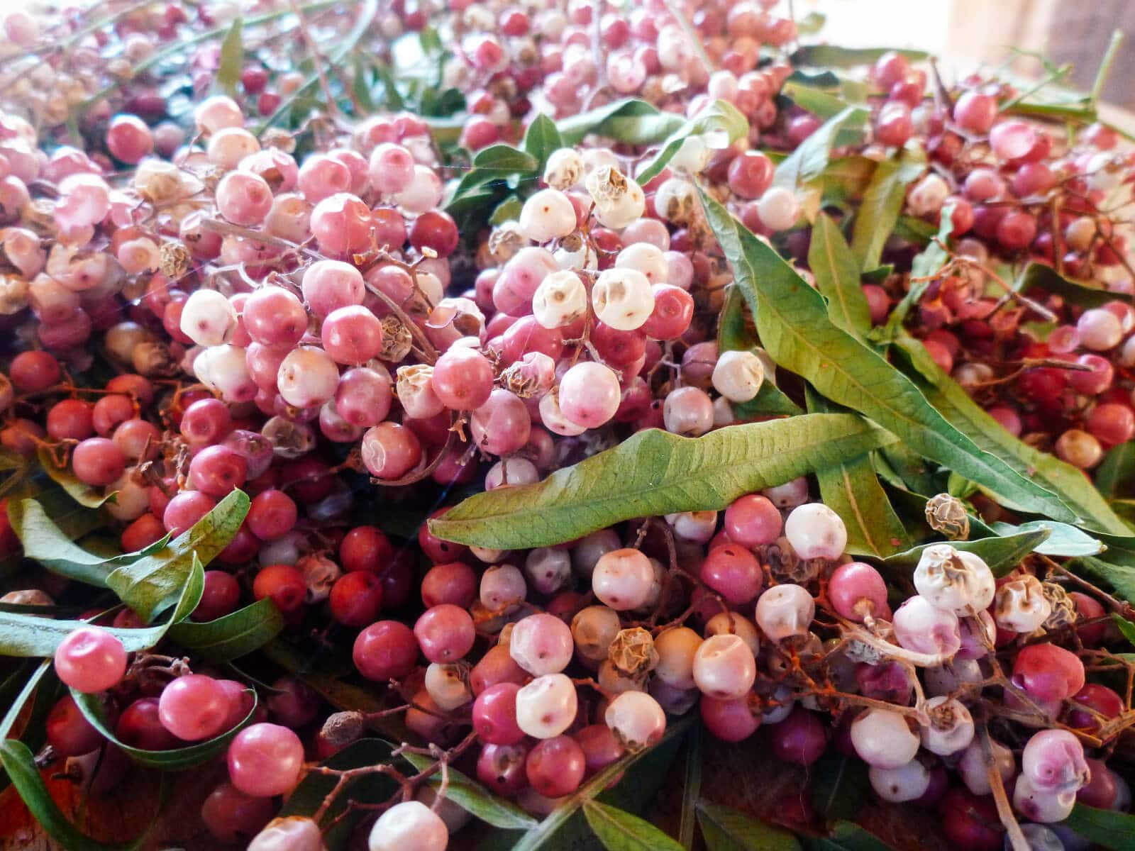 Pink peppercorn berries foraged from a Peruvian pepper tree