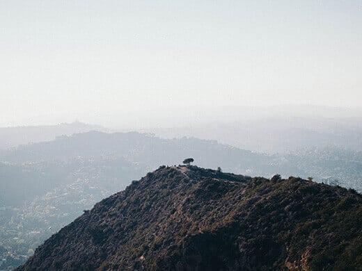 View of the Wisdom Tree from Cahuenga Peak