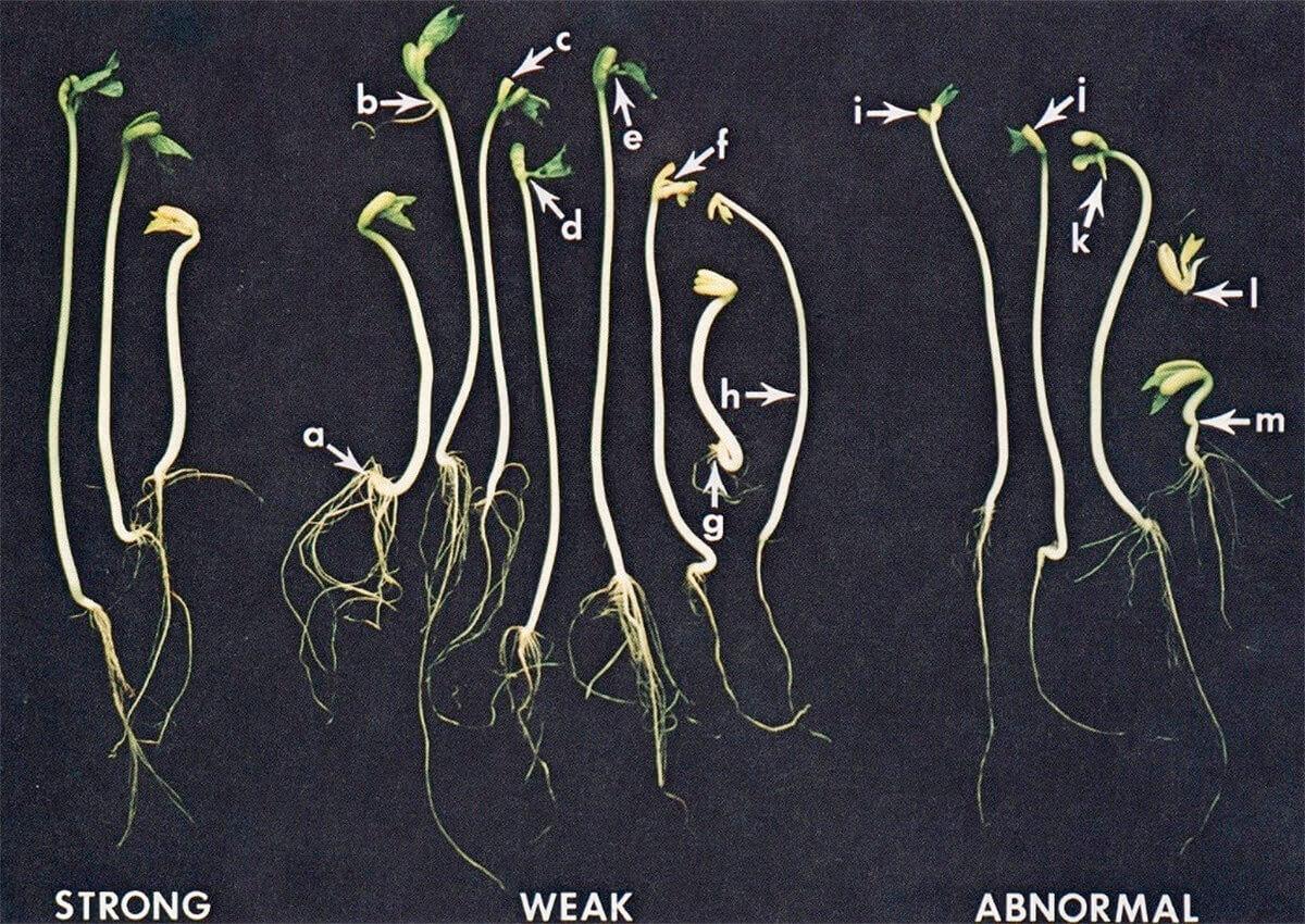 Measuring seed longevity and seed vigor