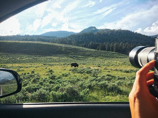 Bison sighting in Yellowstone National Park