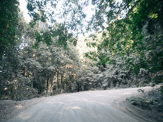 Foliage covered in gray road dust