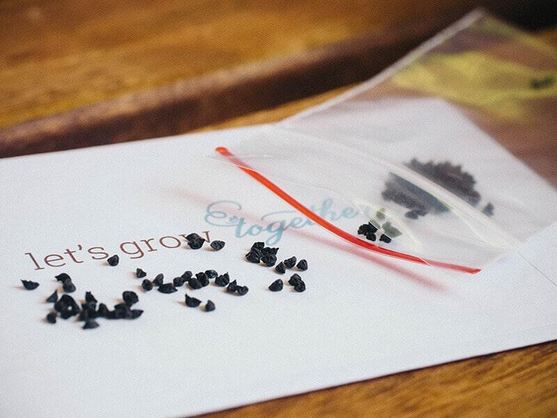 GrowJourney leek seeds
