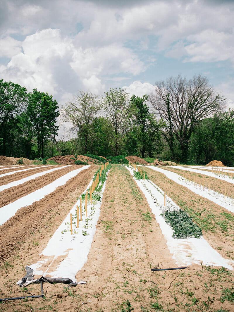 Trial crops at Baker Creek