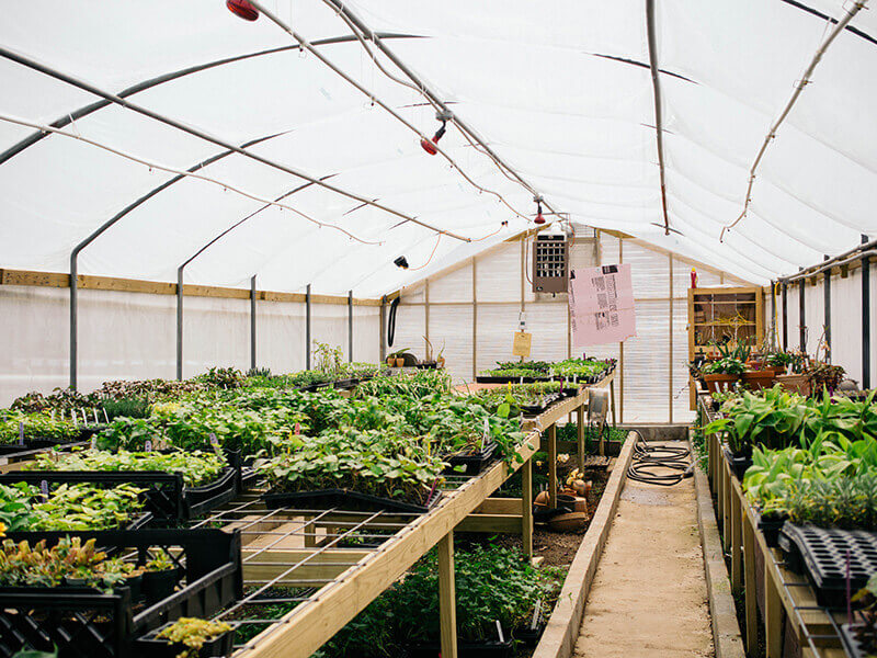 Trial plant warehouse