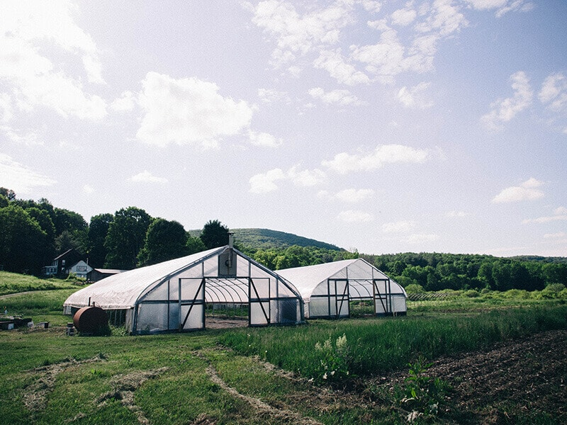 Greenhouses at Indian Line Farm