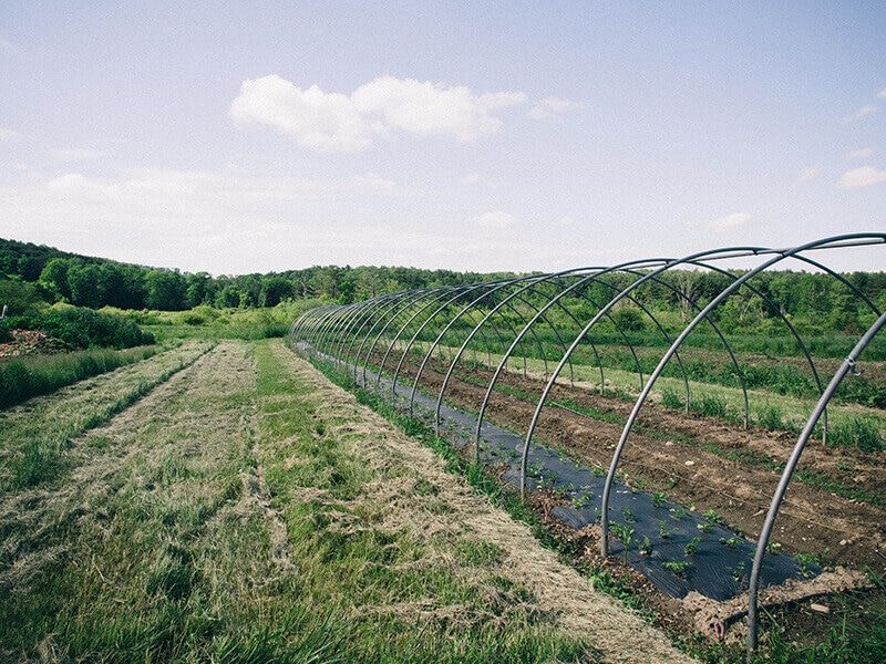 Row crops in an uncovered hoop house