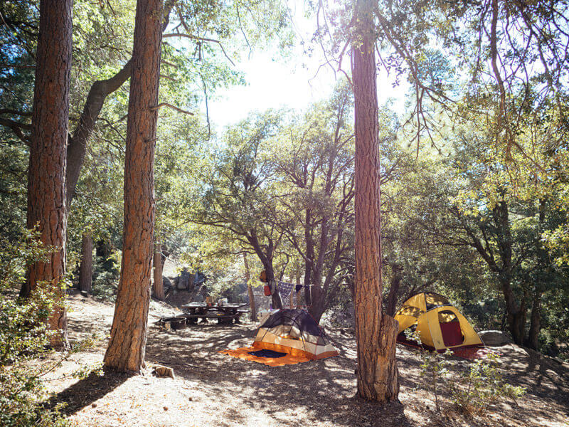 Marion Mountain Campground in Idyllwild