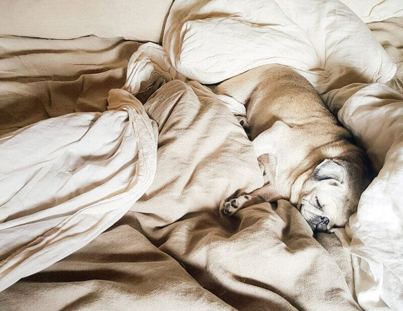 Nestling in bed on a cold day